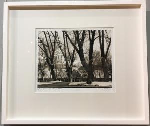 Arūnas Baltėnas / Vilnius. Medžiai prie Vilnelės/ 1995 / Autorinis sidabro bromido atspaudas / 22 x 29
