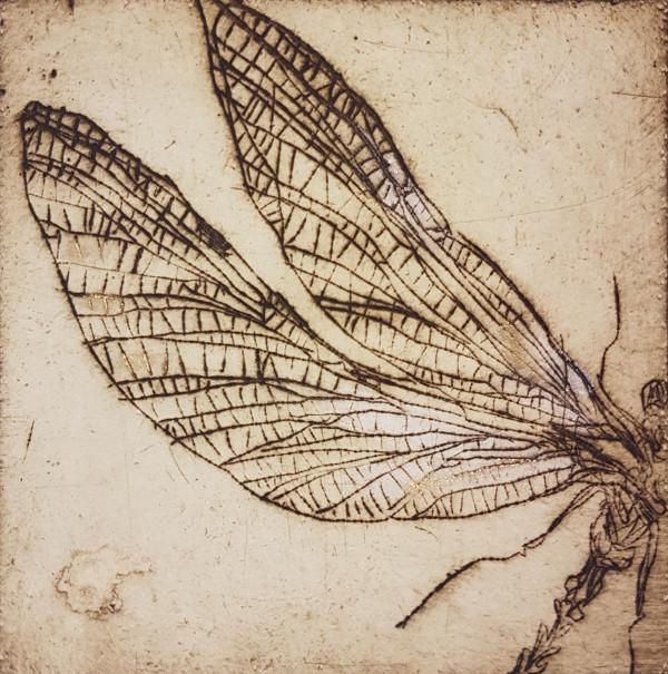 Vabzdžiai 3
