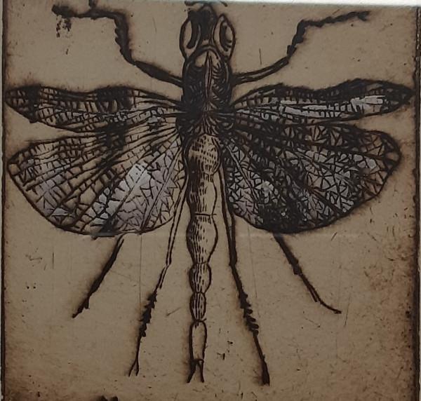 Vabzdžiai 1